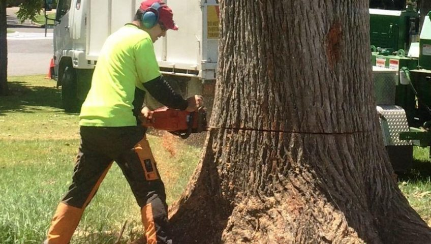 tree care contractor